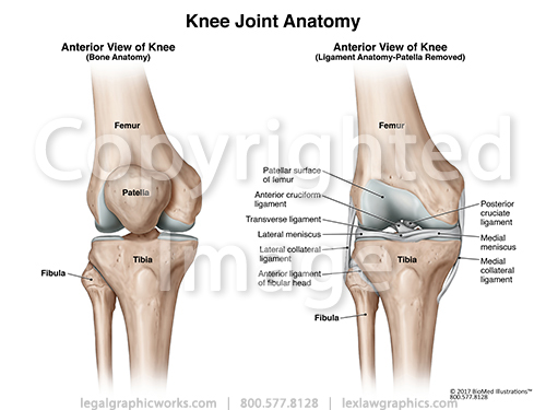 Anterior view of knee joint two views legal graphicworks anterior view of knee ccuart Choice Image