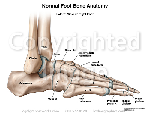 Lateral View Of Right Foot Legal Graphicworks